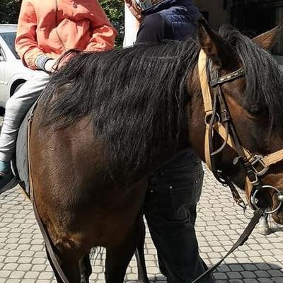 Przedszkolaki z koniem 30