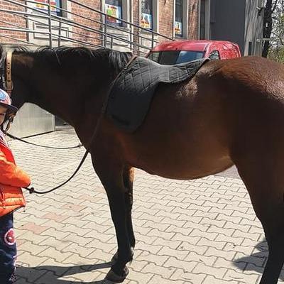 Przedszkolaki z koniem 15