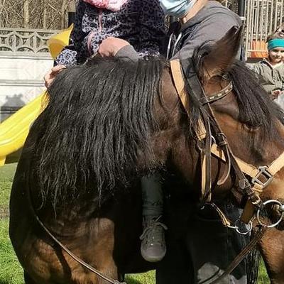 Przedszkolaki z koniem 36