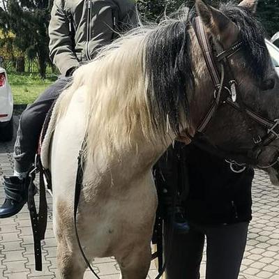 Przedszkolaki z koniem 39