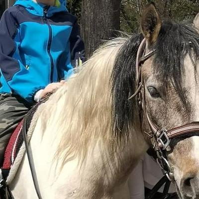 Przedszkolaki z koniem 5